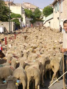 Mes-histoiresLes-moutonsP0323