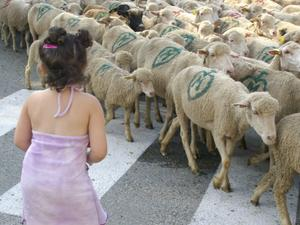 Mes-histoiresLes-moutonsP0327
