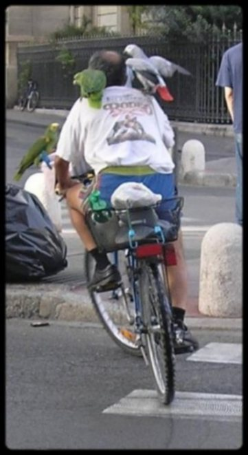 homme oiseaux