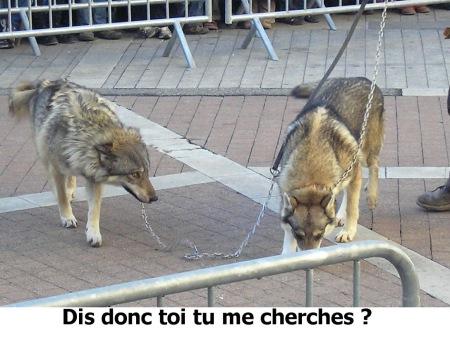 9 loups