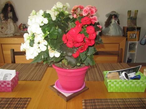 1 plante