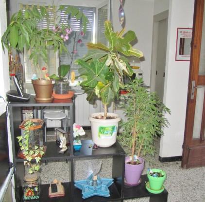 plantes 2