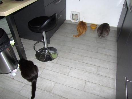 chats mangent