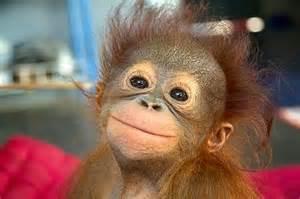 singe-sourit