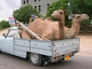 transport-insolite